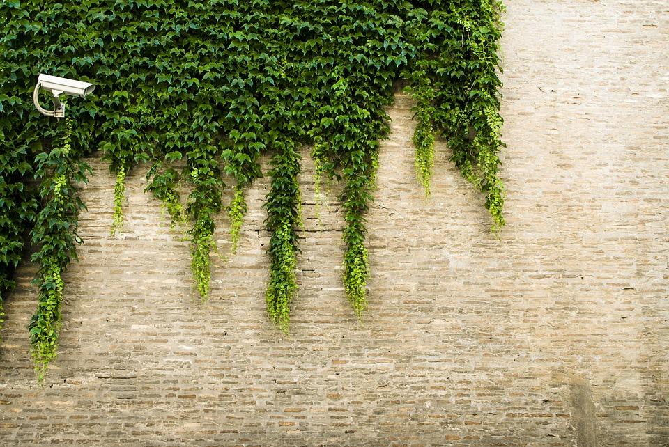 murs végétalisés